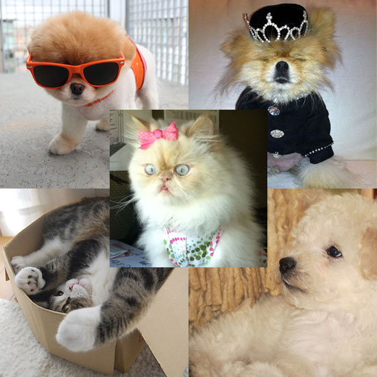 Who's Your Favorite Pet Celeb?