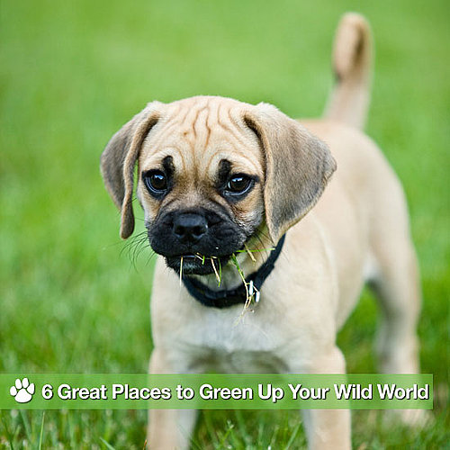 Find Earth-Friendly Pet Ownership Ideas