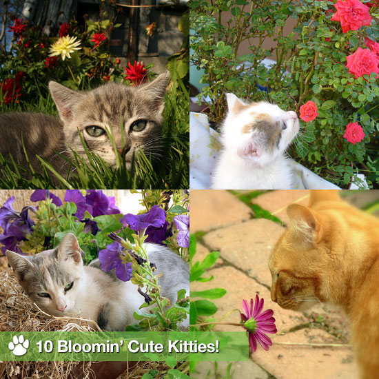 10 Bloomin' Cute Kitties