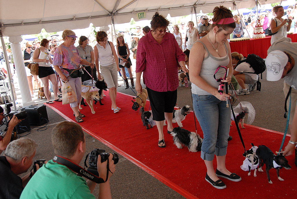 Largest Dog Wedding Ceremony
