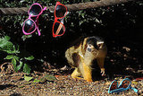 Squirrel Monkey Thieves!