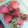 Strawberry Storage Tips