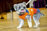 Fashion After Bark: A Collection of Pawdorable Doggie Designs