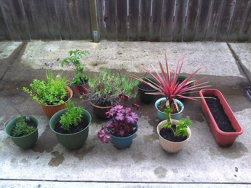 My patio container garden, year two