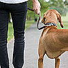 3 Nonverbal Ways to Let a Dog-Walking Stranger Know to Stay Away