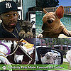 Celebrity Pets on Twitter