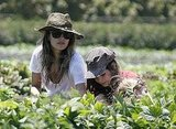 Rachel Bilson picked fruit.