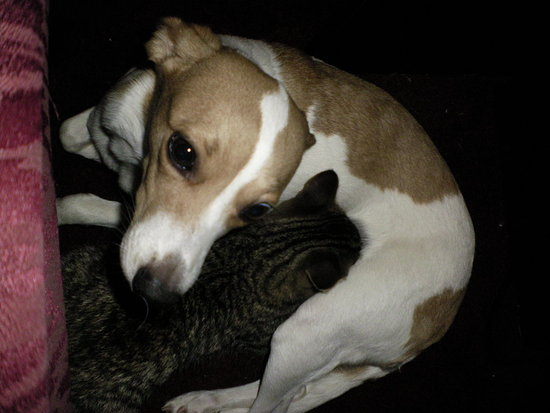 The mommy dog and her baby kitten. :)