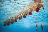 Spain's synchronized swimming team lines up while competing at the FINA World Championships.