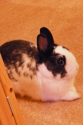 Pet Pic of the Day: Benjamin Bunny
