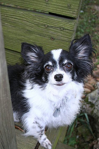 Pet Pic of the Day: Gizmo