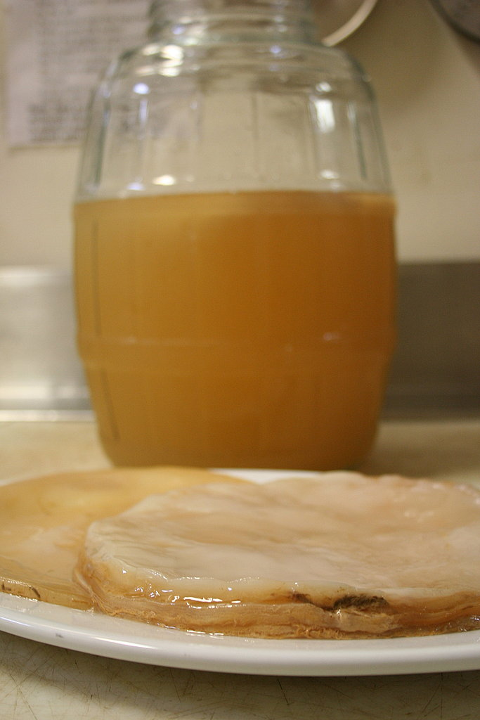 Scoby in the Starter Liquid
