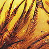 Dinosaur Feathers Discovered in Amber
