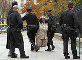 US park police arrest former Marine Corporal Evelyn Thomas, who handcuffed herself to the fence of the White House during the protest.