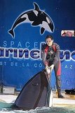 Marion Cotillard fed an orca whale fish.