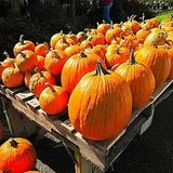 Where to Find Pumpkin Patches NYC