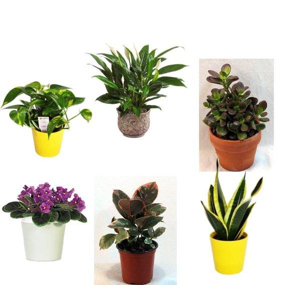 Best Plants For The Office Popsugar Smart Living
