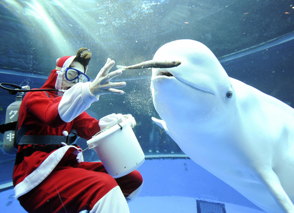 The beluga's eyes are as wide as a kid's at Christmas.