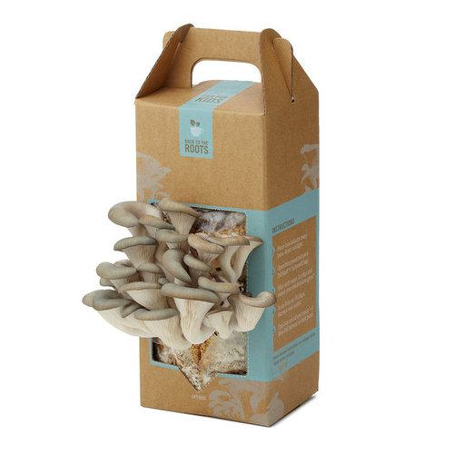 MUSHROOM KIT | Growing Kit for Pearl Oyster Mushrooms | UncommonGoods