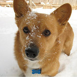 Cold Weather Pet Care Tips