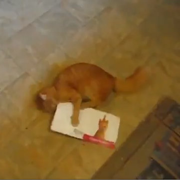 Funny Video of Cat Attacking a Birthday Card