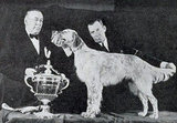 Daro of Maridor, an English setter, won in 1938. Source: American Kennel Club Archives