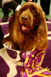 Sussex spaniel Ch Clussexx Three D Grinchy Glee won in 2009.