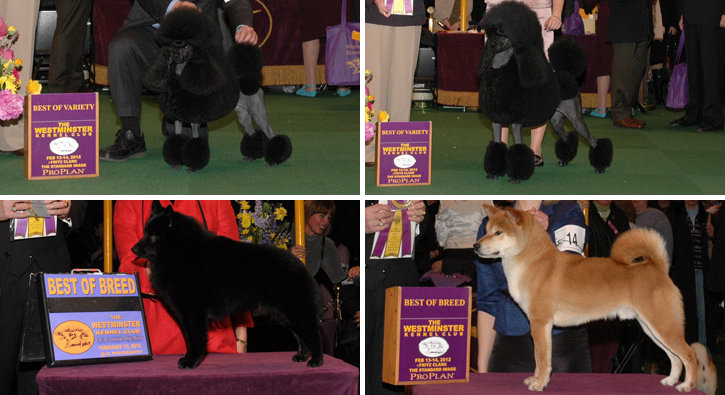 Best of Breed: Non-Sporting Division
