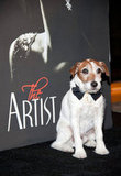 Uggie arrives dressed to the nines at The Weinstein Company's afterparty. Source: Wire Image