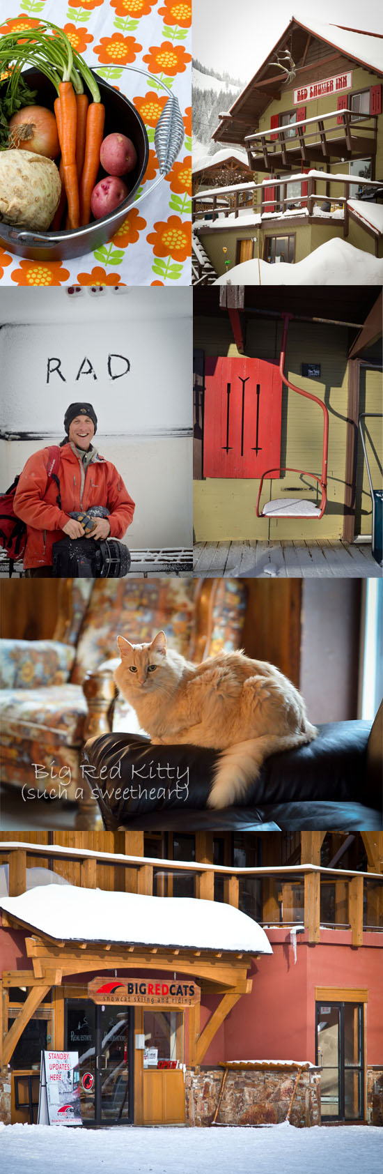 Big Red Cats and Big Red Kitty in Rossland, B.C.