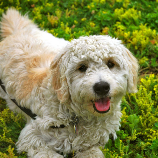 Sneeze-Free: Hypoallergenic Dog and Cat Breeds