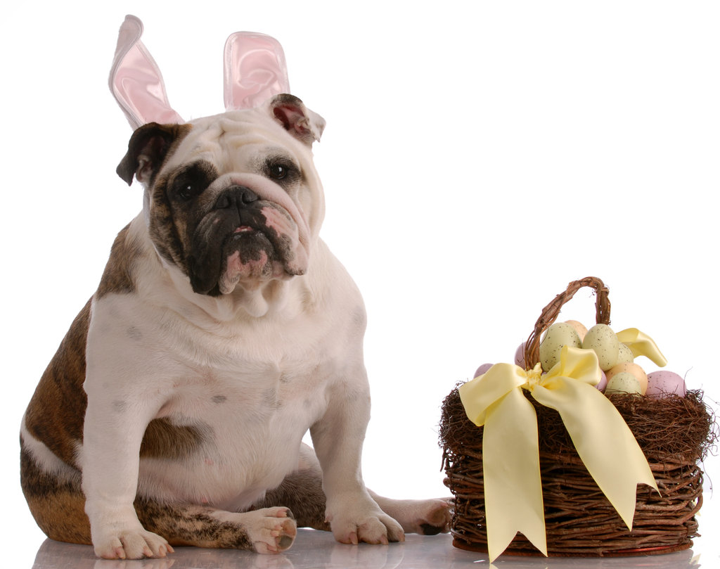 This Easter, Don't Leave That Basket Unattended!