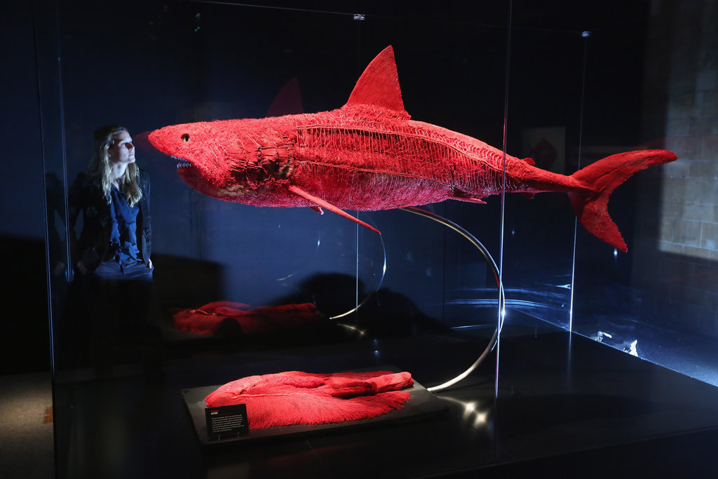 What appears to be an eerily glowing shark is actually the animal's circulatory system highlighted with colored resin.