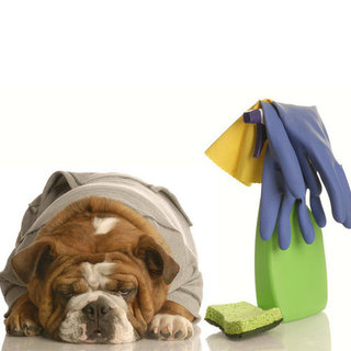 Spring Cleaning Homes With Pets