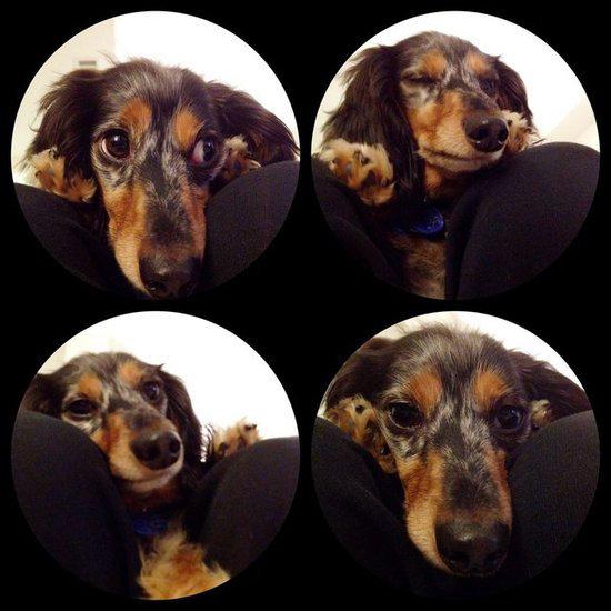 Pup in 4D