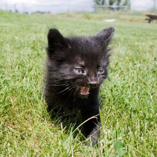Anemia In Cats Cure