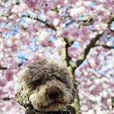 Blossom Buddy