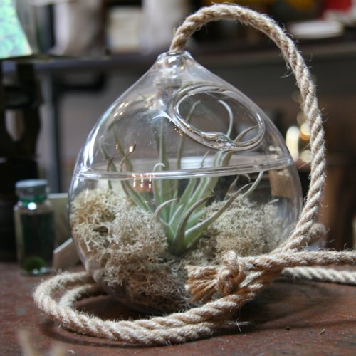 DIY Terrarium Instructions and Tips