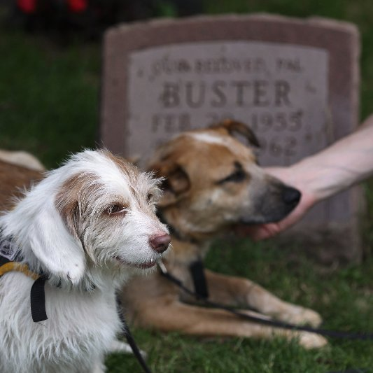 Paying Respects to Pet Pals