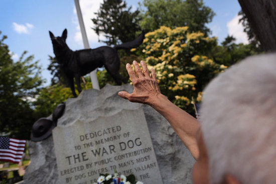 A regal German Shepherd stood guard over the War Dog Memorial at Hartsdale Pet Cemetery.