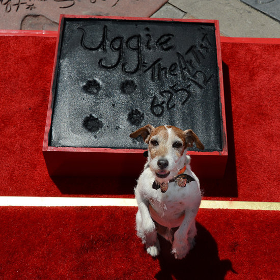 Uggie&#039;s Paw Print Ceremony Pictures