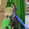 Angelina Jolie Stunts Pictures on Maleficent Set