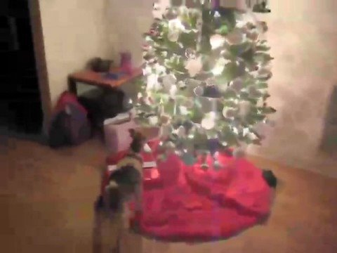 Super-Cute Video: This Dog's Rocking Around the Christmas Tree