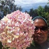 Oprah Winfrey picked a giant hydrangea from her garden. Source: Instagram user oprahwinfrey