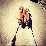 Rosie Huntington-Whiteley walked two cute dachshunds.  Source: Instagram user rosiehw
