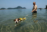 A Jack Russell can paddle only so far, but good thing he's wearing his life jacket!