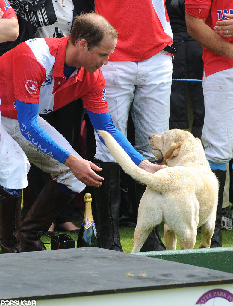 Prince William bent down to pet a golden retriever at the polo match.