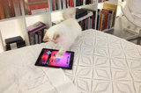Choupette the Technophile
