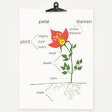 Anatomy of a Flower Typographic Print ($15)