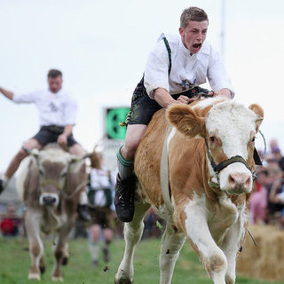 2012 Bavarian Ox Racing Championship